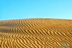 Dubai Desert Diaries